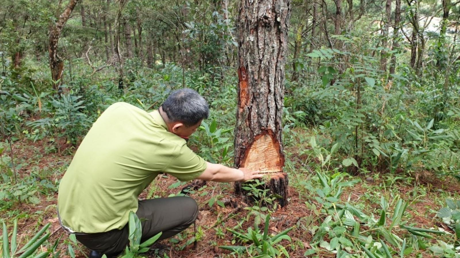 Lâm Đồng điều tra vụ phá rừng phòng hộ gần trạm kiểm lâm