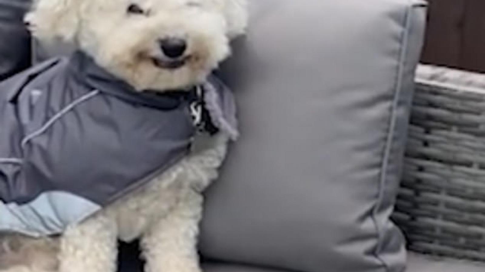"""Video: Khoảnh khắc chú chó """"cười"""" tít mắt khi chủ nhân trêu đùa"""