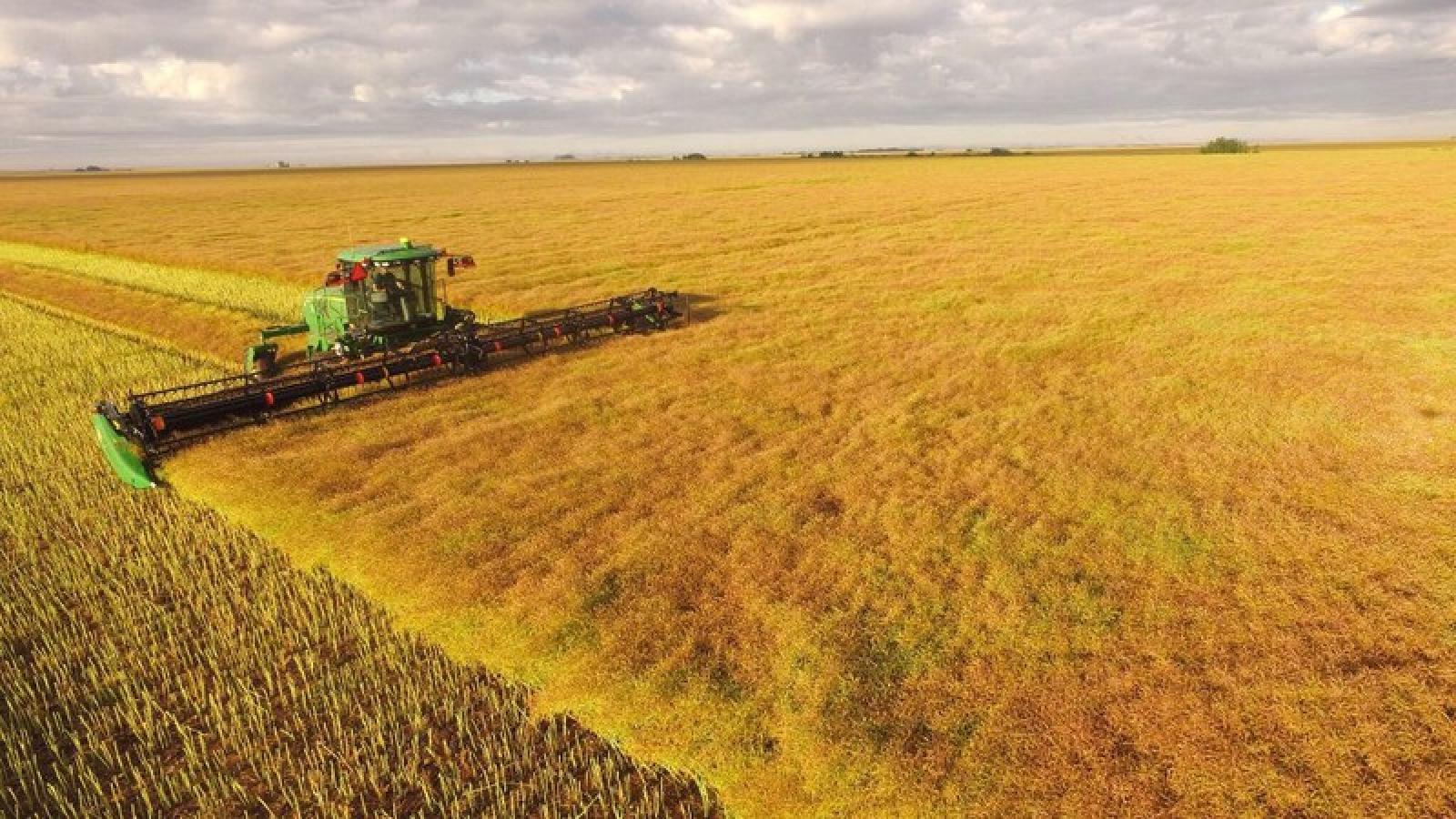 Trung Quốc ngừng nhập lúa mạch từ nhà xuất khẩu ngũ cốc lớn nhất Australia