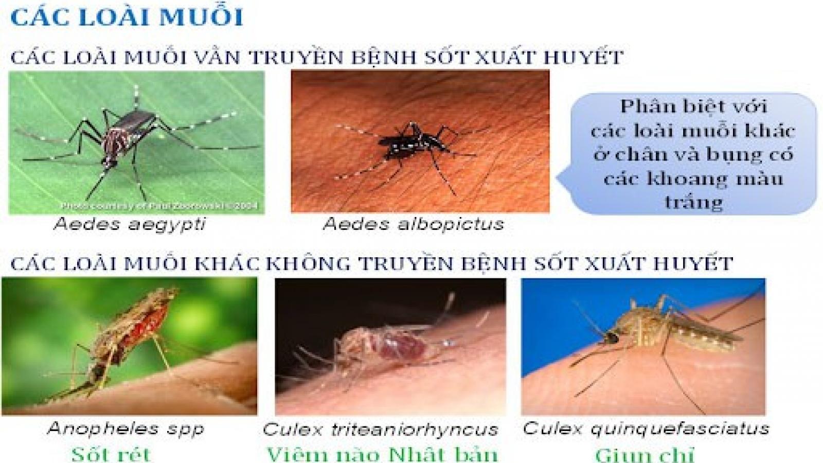 2 ca tử vong do sốt xuất huyết tại Hà Nội chỉ trong nửa tháng 