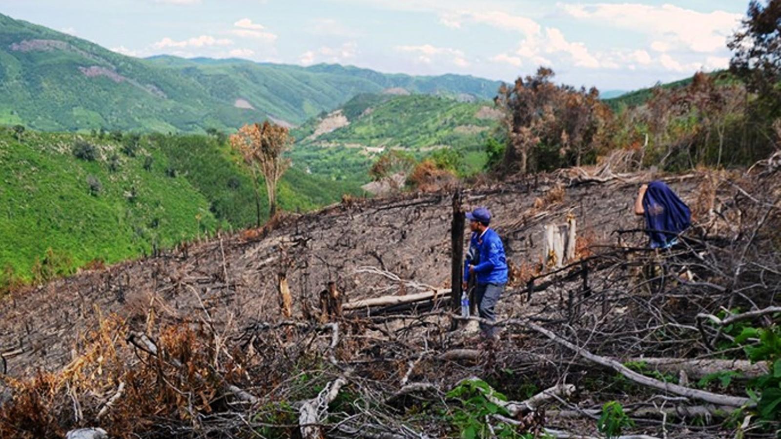 Kiểm tra dấu hiệu vi phạm đối với cán bộ xã liên quan đến phá rừng ở Phú Yên