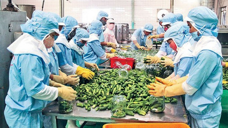 Vietnam emerges as ideal supplier of agricultural produce for global market