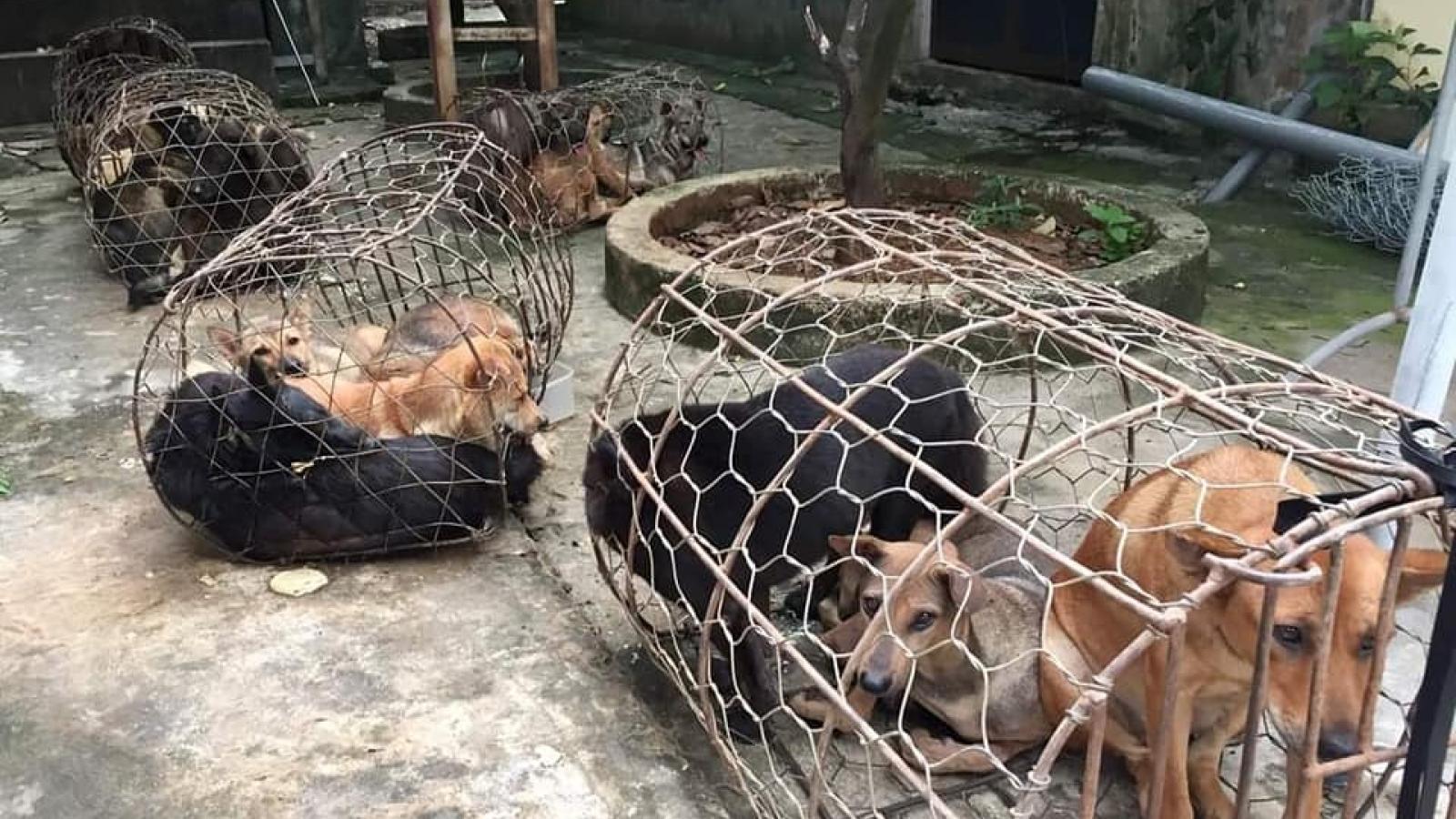 Nhóm đối tượng mỗi đêm trộm gần nửa tấn chó