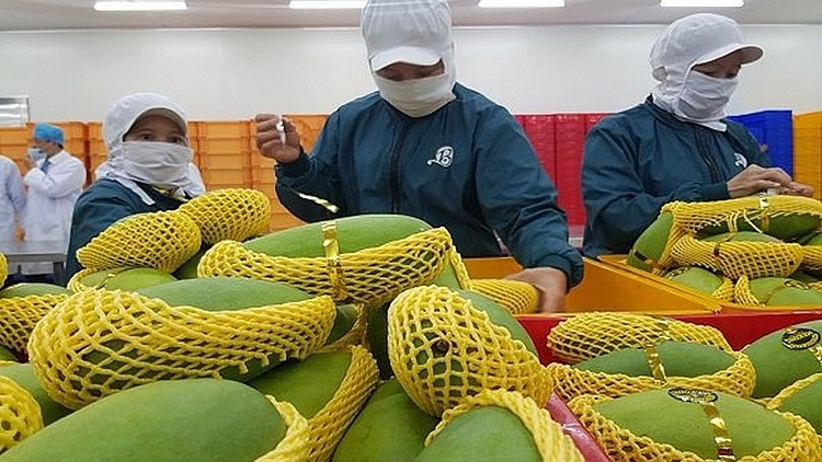 Chuyên gia kiểm dịch xuất khẩu trái cây Hoa Kỳ sẽ đến Việt Nam vào 2/9