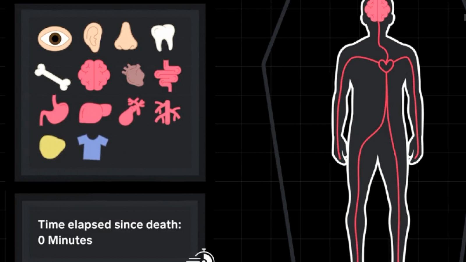 Cơ thể sẽ ra sao khi nằm trong quan tài 100 năm?