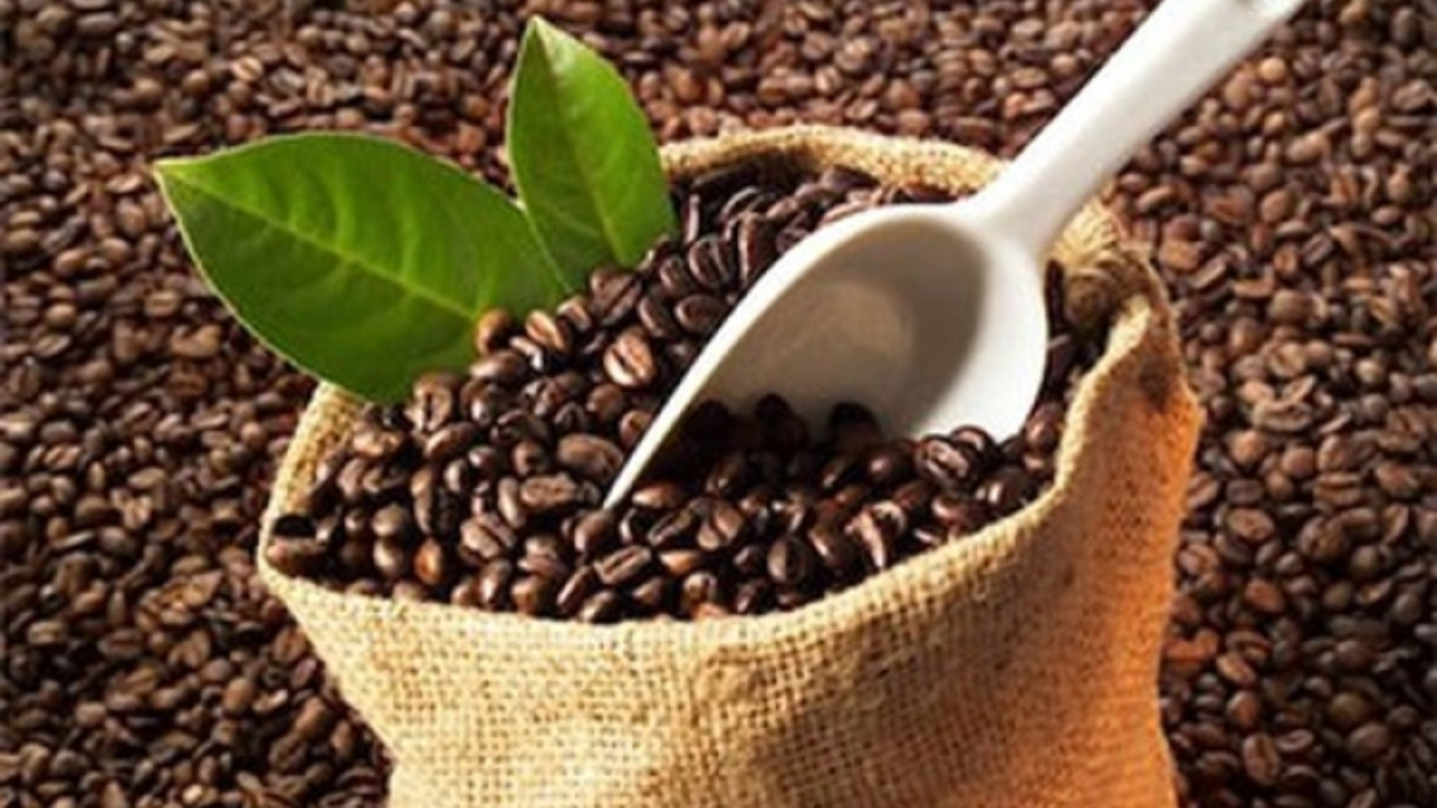 Vietnam exports first batch of coffee to EU with zero tariffs