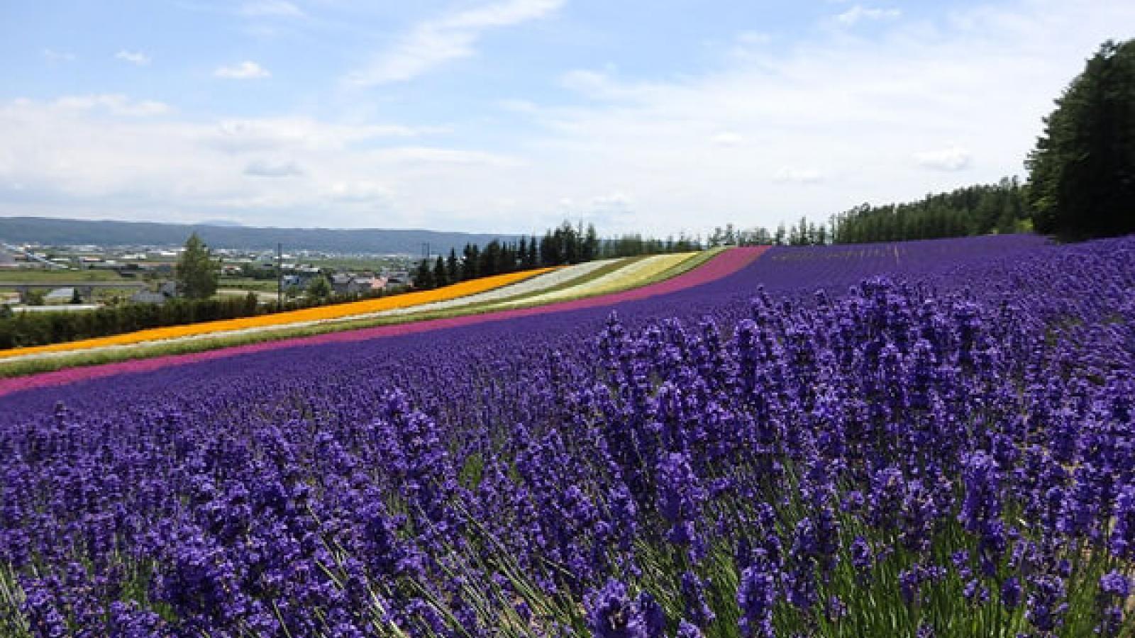 10 điểm dừng chân lý tưởng khi đến Hokkaido, Nhật Bản