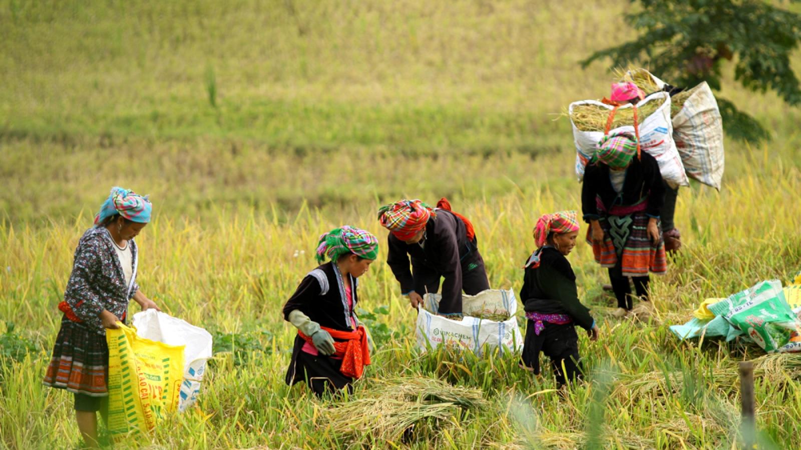 Vì sao tỷ lệ hộ nghèo của Lai Châu giảm vượt chỉ tiêu Nghị quyết đề ra?
