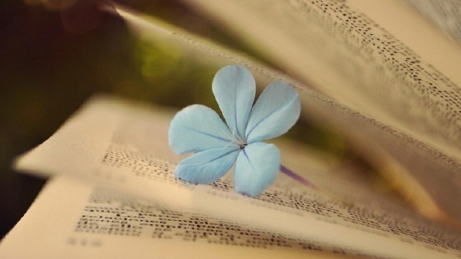 Gặp phải nghịch duyên, đôi khi lại là may mắn của đời người