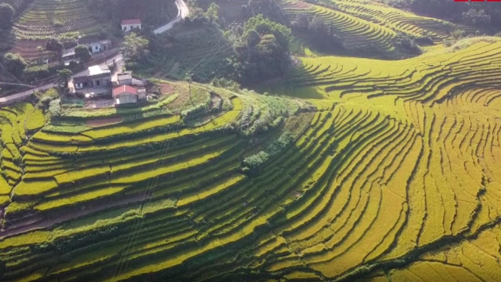 Ngắm ruộng bậc thang vàng rực mùa lúa chín ở Quảng Ninh