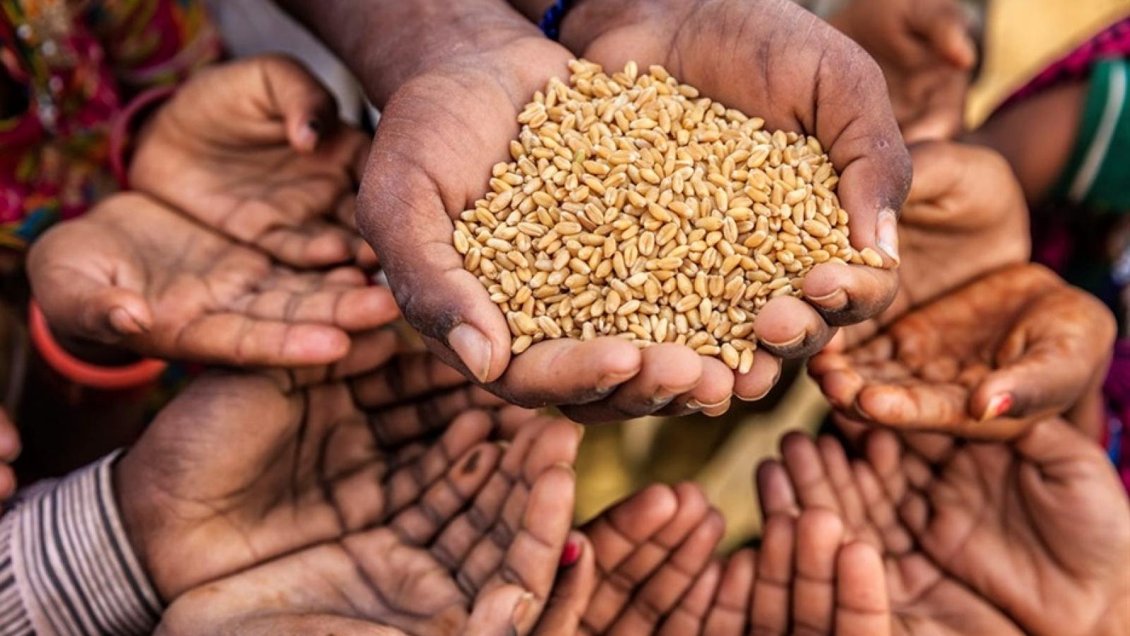 Giải Nobel Hòa bình 2020 được trao cho Chương trình Lương thực Thế giới