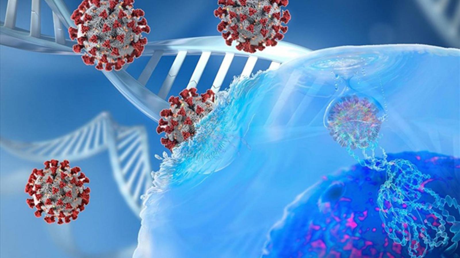 Biến chủng mới của SARS-CoV-2 có thể đã lây từ người sang người ở Mỹ
