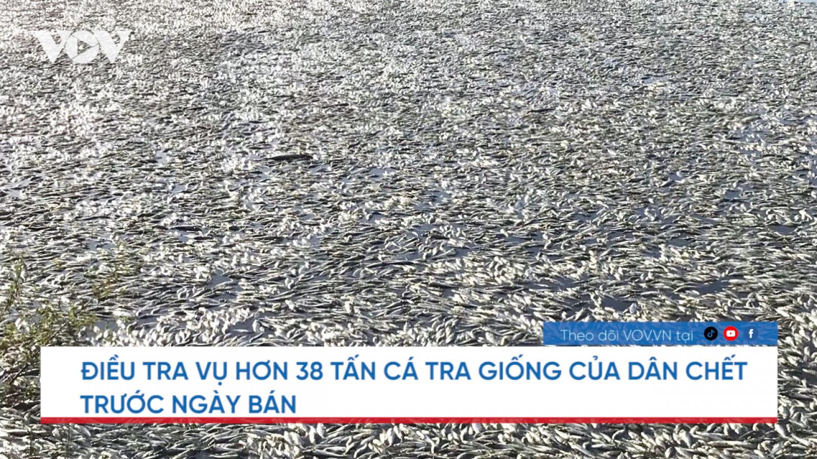 Nóng 24h: Điều tra vụ hơn 38 tấn cá tra giống chết trước ngày bán