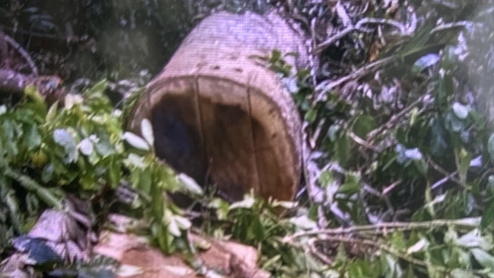 Xử lý nghiêm vụ khai thác rừng phòng hộ trái phép ở huyện Phước Sơn, Quảng Nam