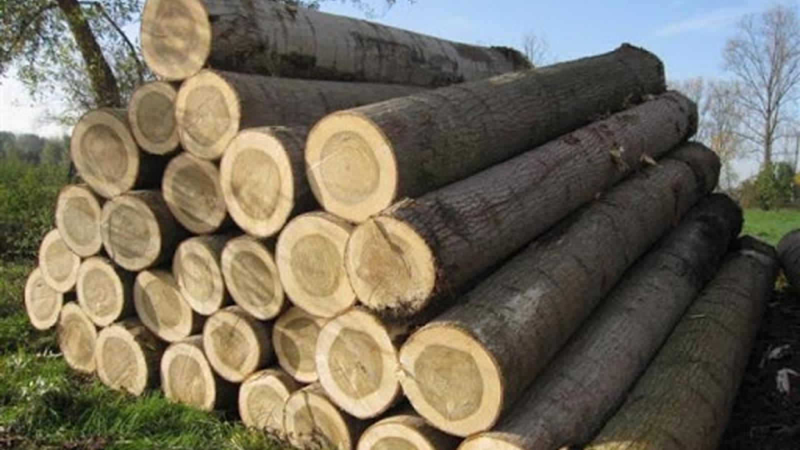 """Chứng minh gỗ nguyên liệu hợp pháp: Điều kiện """"sống - còn"""" để xuất khẩu"""