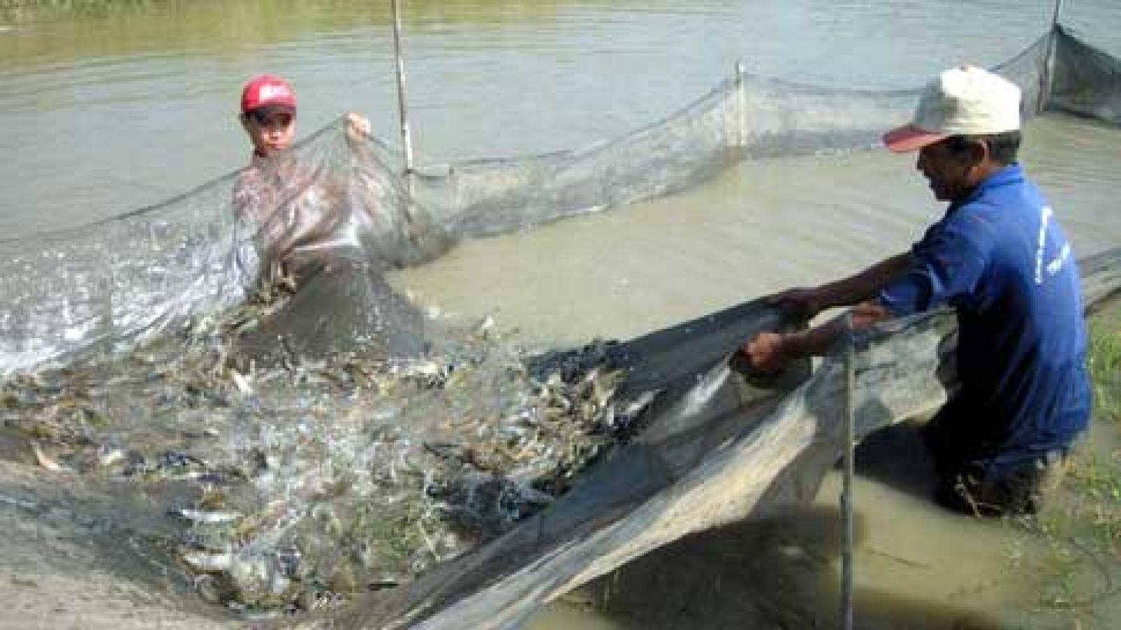 Năm 2030 xuất khẩu thủy sản đạt từ 18 - 20 tỷ USD
