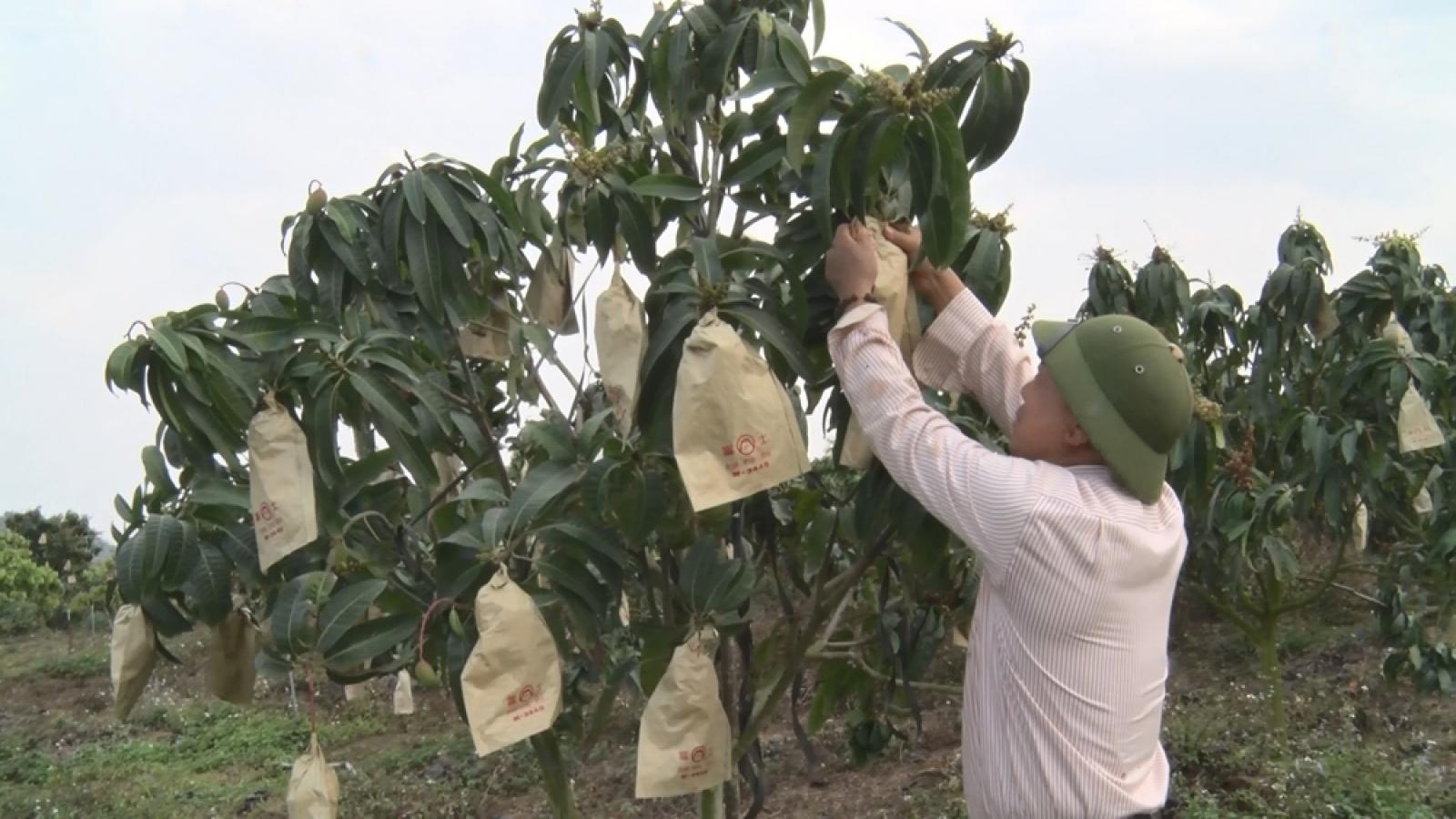 Sơn La sẽ phát triển 25.000 ha vùng nguyên liệu nông nghiệp chất lượng cao