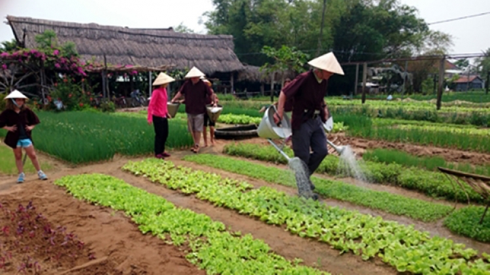 Kinh doanh du lịch nông nghiệp còn mang nhiều tính tự phát
