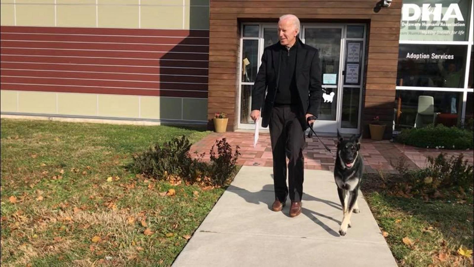 Lần đầu tiên trong lịch sử chú chó được giải cứu trở thành đệ nhất khuyển tại Nhà Trắng