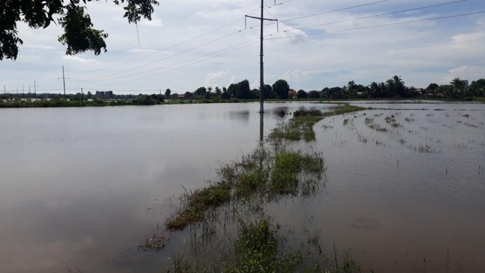 Nông dân Bình Thuận thiệt hại nặng do mưa lũ