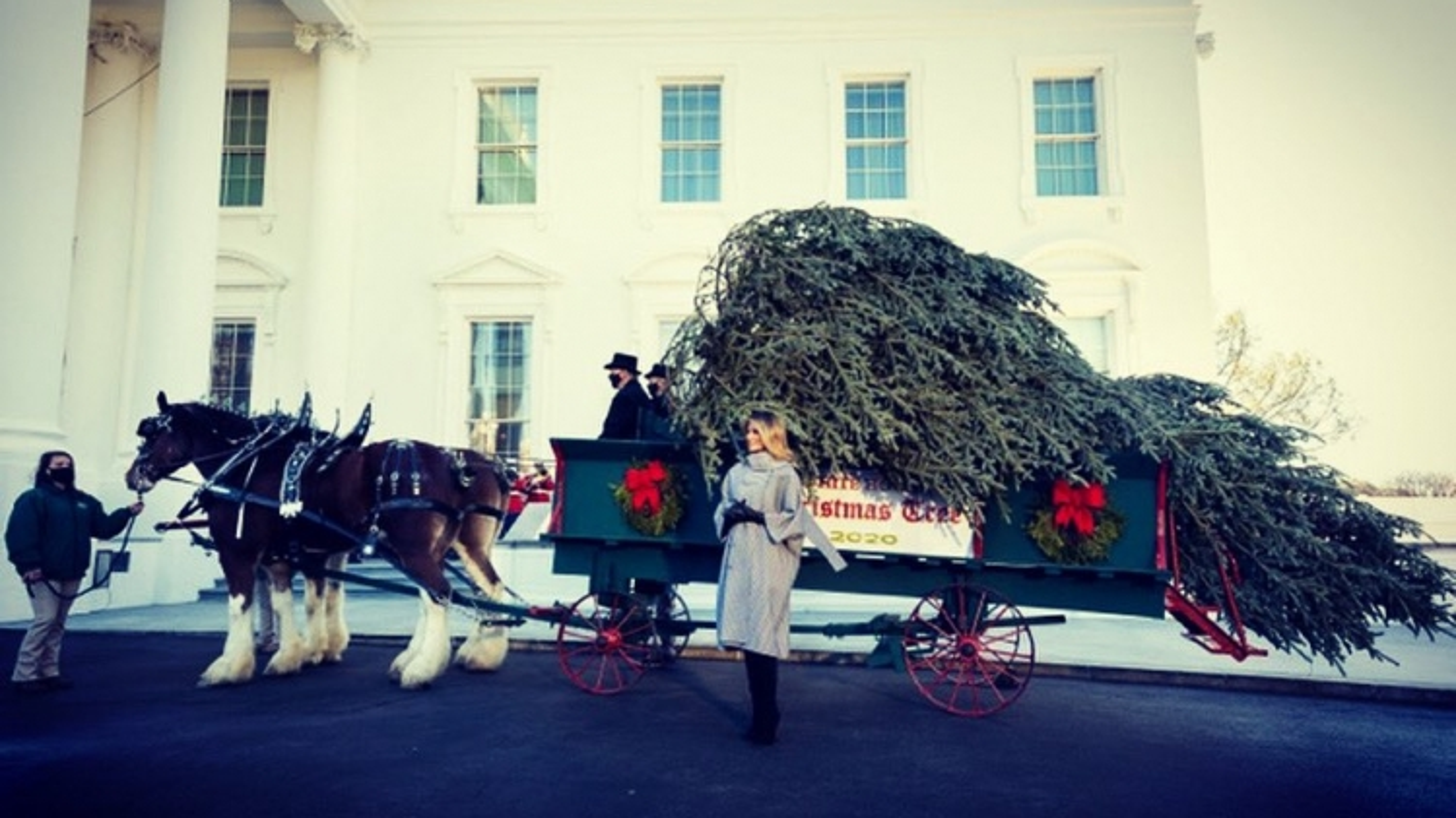Đệ nhất phu nhân Melania đón cây thông Noel tới Nhà Trắng