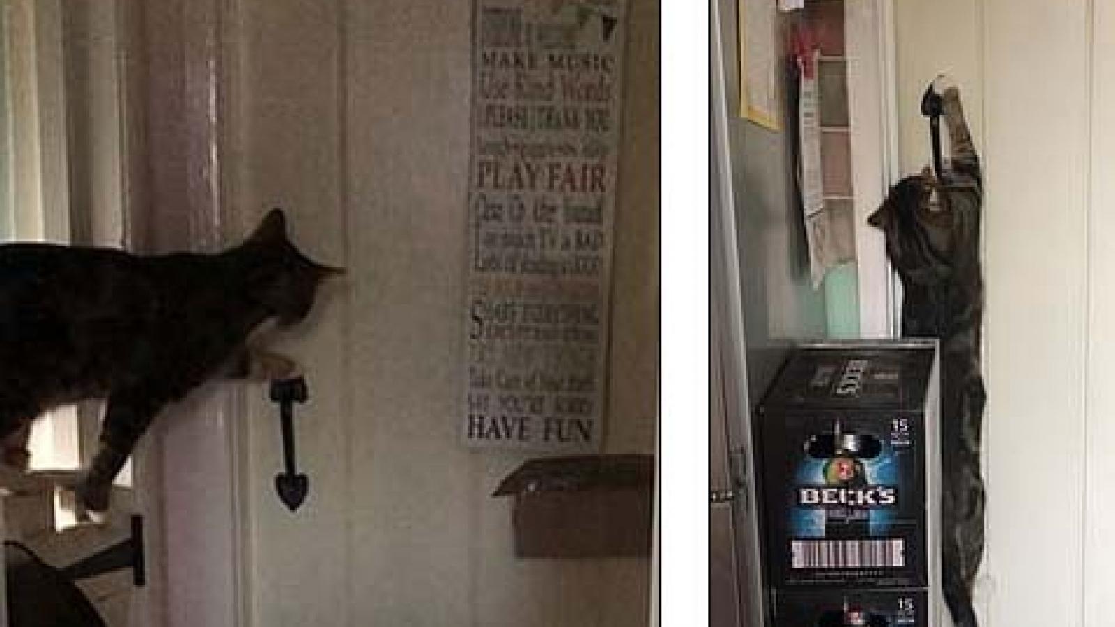 """Chú mèo tinh quái trổ tài """"bẻ khóa"""" thành thục"""