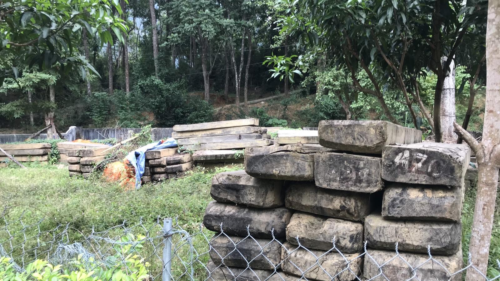 Xót xa nhìn cả trăm m3 gỗ quý dần hư hỏng ngay tại Ban quản lý rừng