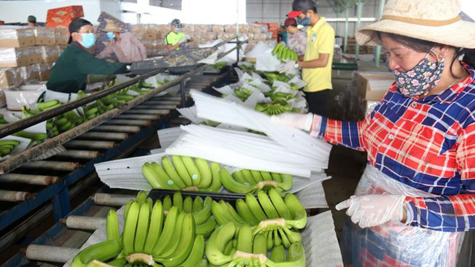 Kim ngạch xuất nhập khẩu Việt Nam – Lào đã tăng trở lại