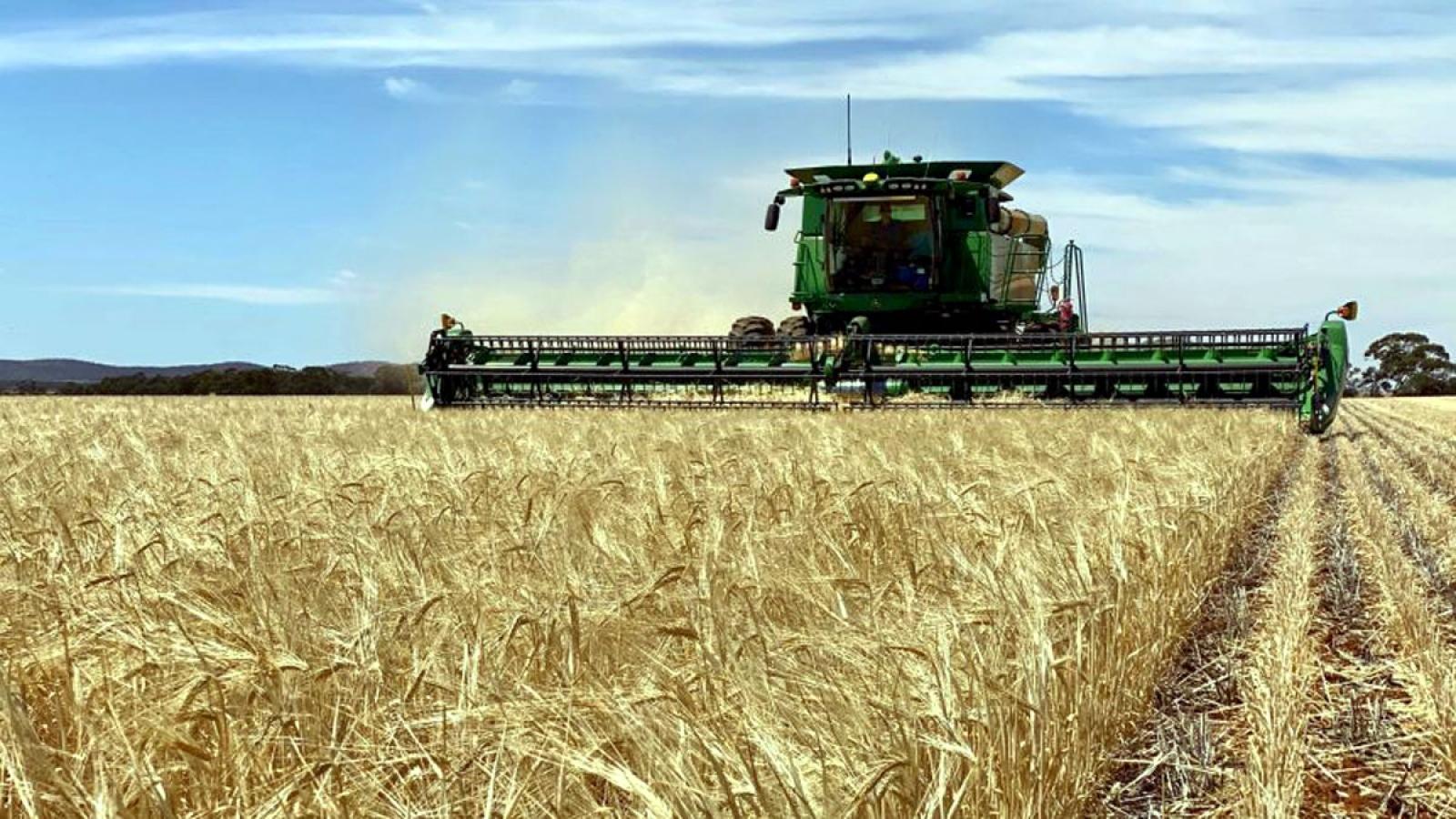 Australia chuẩn bị kiện Trung Quốc lên WTO