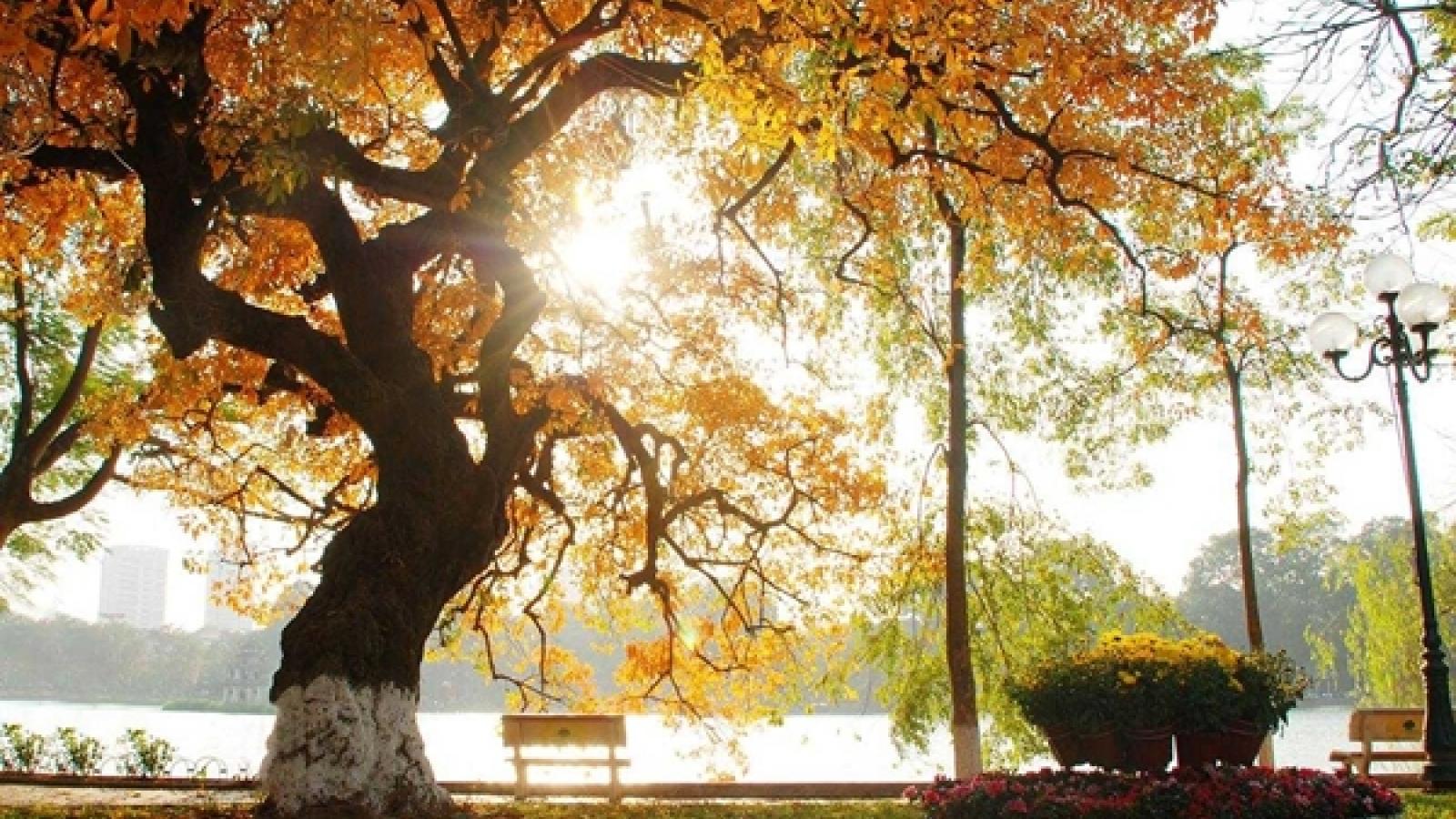Thời tiết ngày 21/11: Miền Bắc trưa chiều trời nắng
