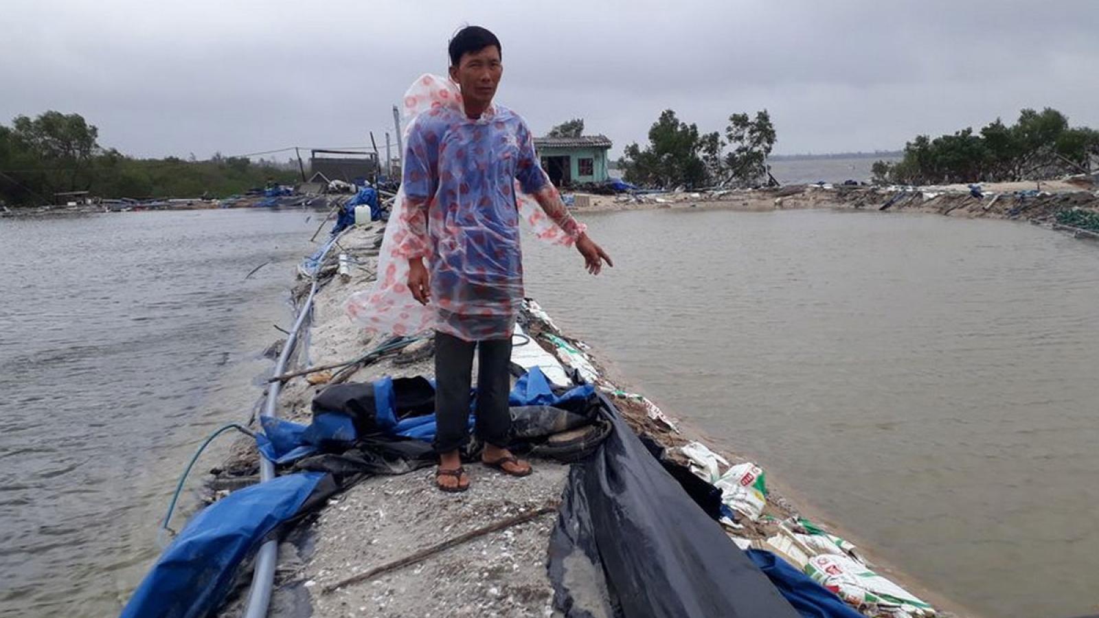 Quảng Nam: Người nuôi tôm trắng tay sau bão lũ