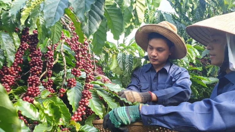 Coffee sector aims to promote domestic consumption