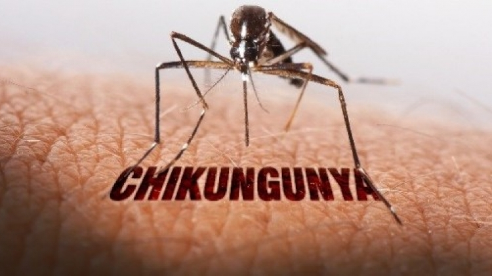 An Giang takes proactive measures against Chikungunya virus