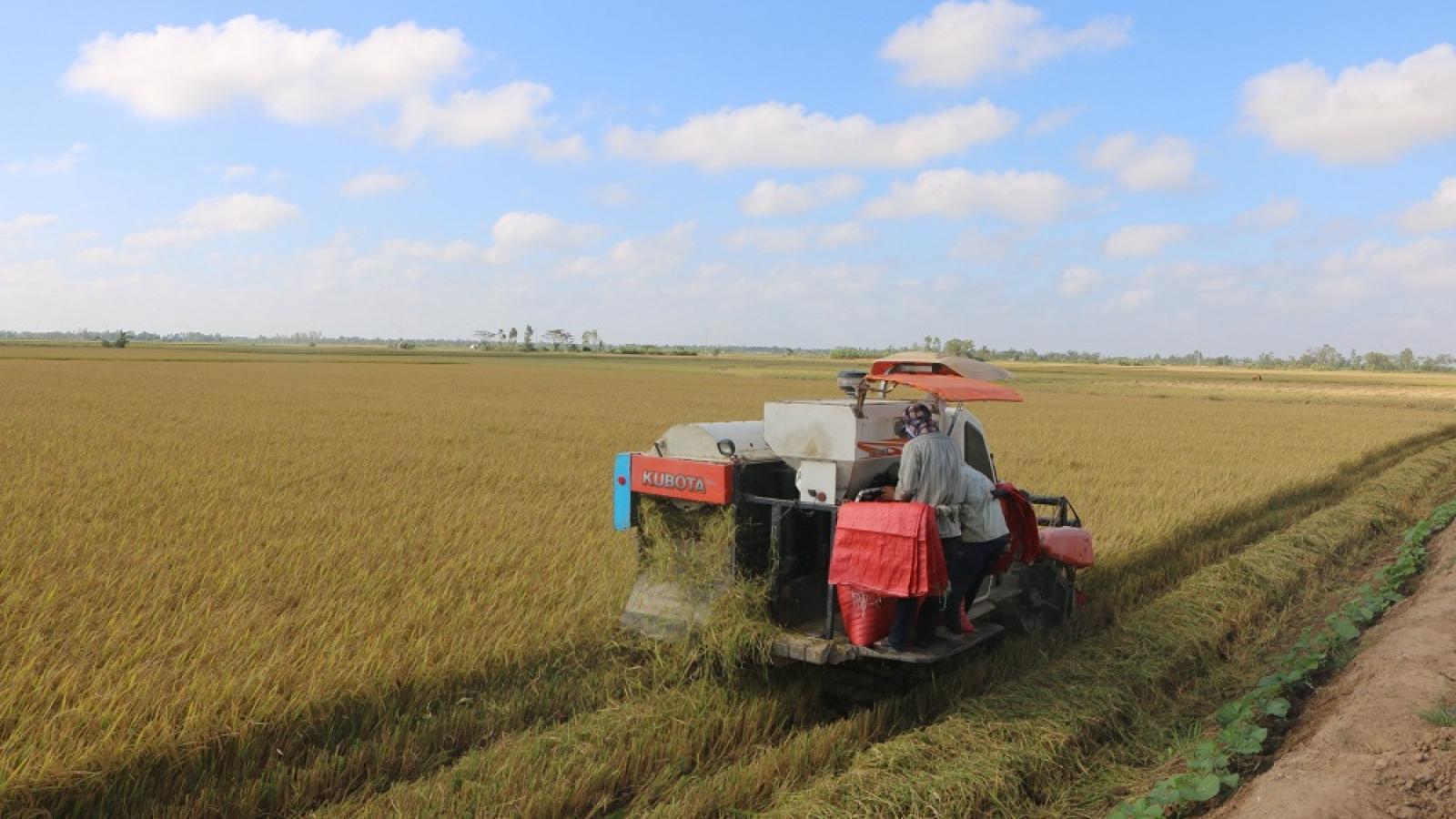 Hiệu quả từ tái cơ cấu ngành nông nghiệp ở Sóc Trăng