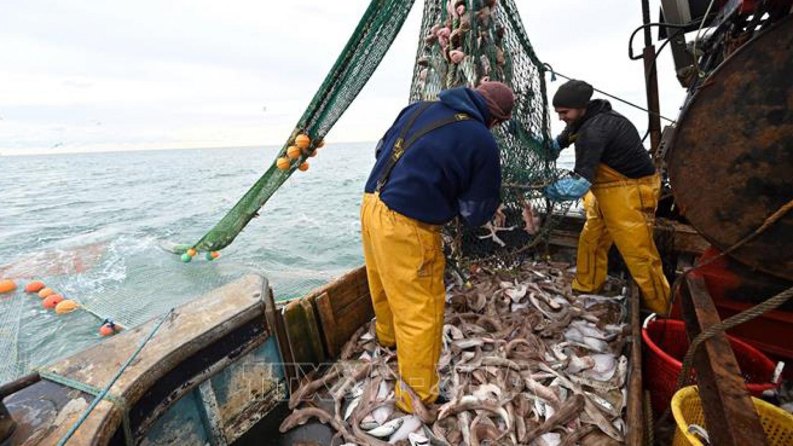 Đàm phán hậu Brexit giữa EU và Anh đạt đột phá trong lĩnh vực nghề cá
