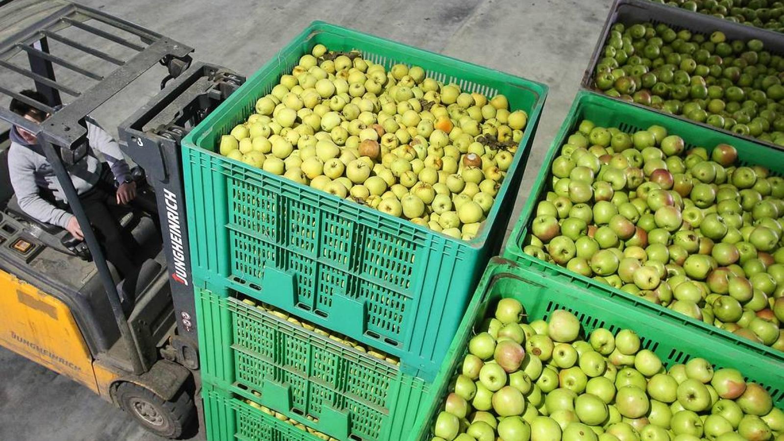 Nga cấm nhập cà chua và táo từ Azerbaijan từ ngày 10/12