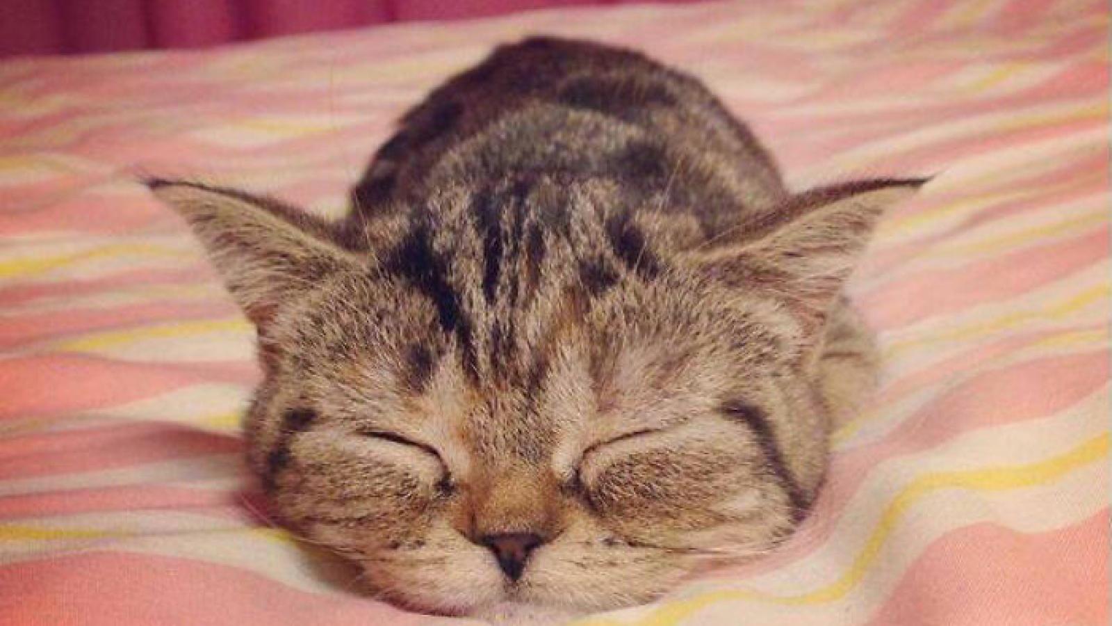1001 khoảnh khắc mèo ngủ say khiến bạn nhìn vào là muốn mỉm cười