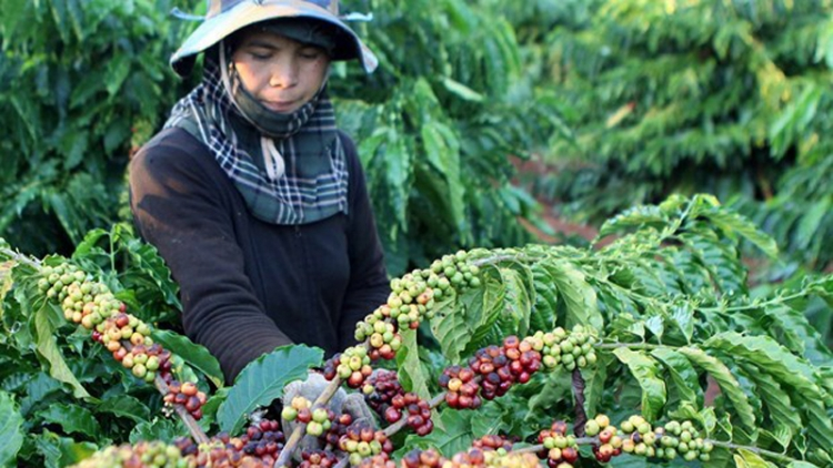 Vietnam exports over 1.7 million tonnes of coffee in 2020