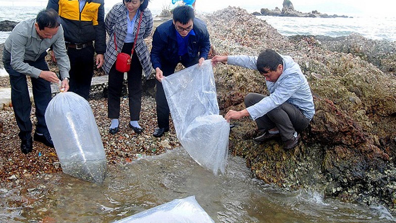 Bình Định thả 6.000 con cá chẽm giống ra đầm Thị Nại