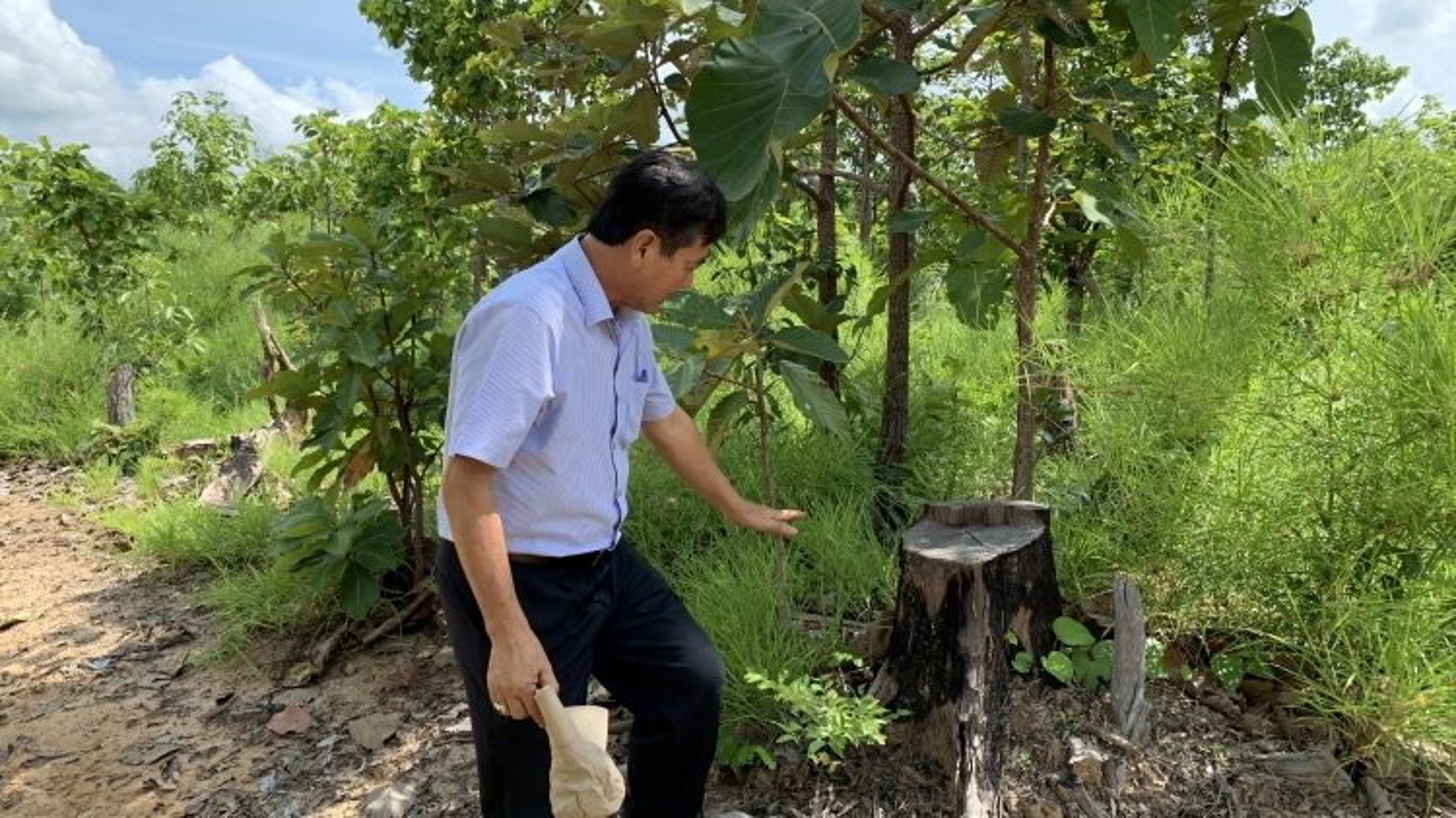 Thủ tướng chỉ đạo kiểm tra, xử lý vấn đề VOV nêu về phárừng ởTây Nguyên