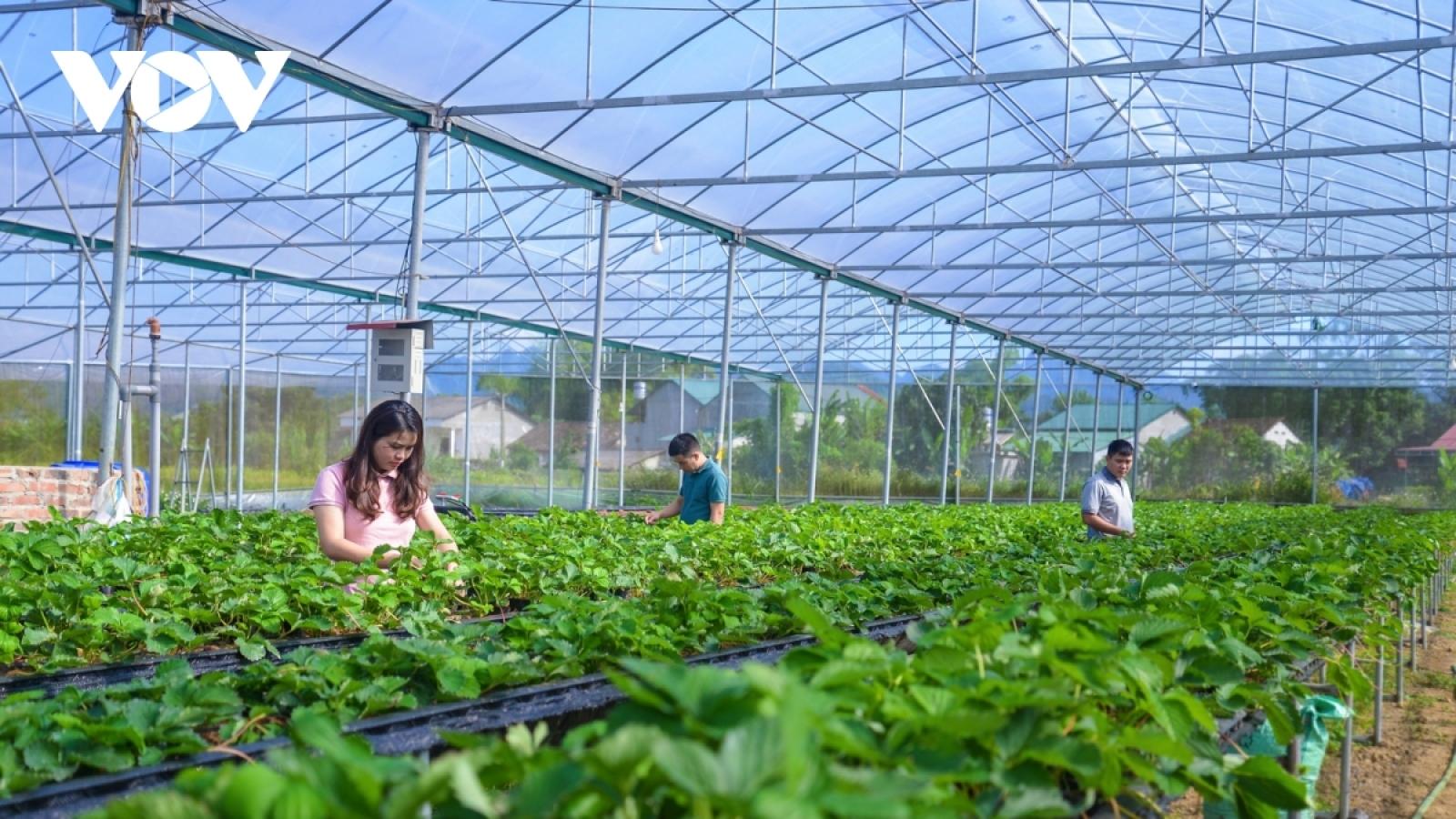 Ngày càng nhiều HTX ứng dụng công nghệ cao vào sản xuất và tiêu thụ nông sản