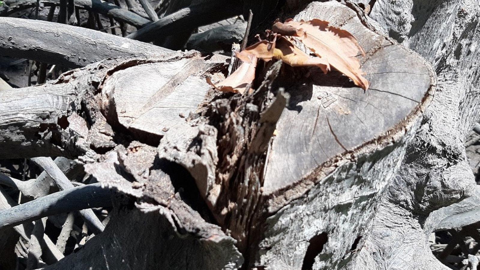 Vụ đốn hạ gần 200ha rừng phòng hộ ở Đồng Nai, việc xử lý thiếu tính răn đe?