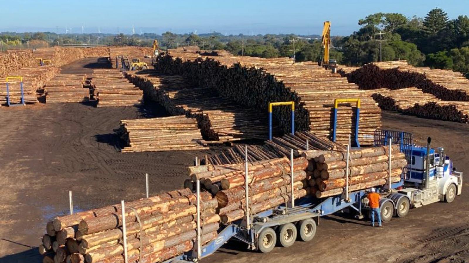 Trung Quốc mở rộng lệnh cấm nhập khẩu gỗ tròn của Australia