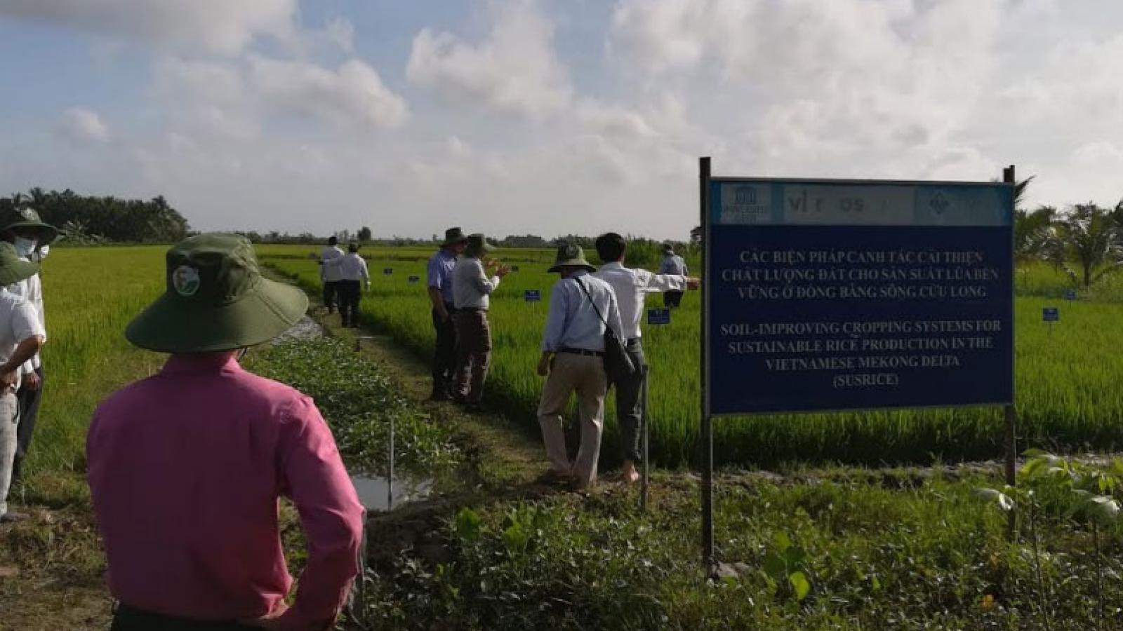 Chia sẻ cải thiện chất lượng đất cho sản xuất lúa bền vững ở Đồng bằng Sông Cửu Long
