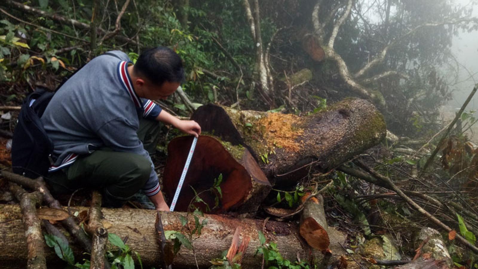 Khởi tố vụ phá rừng tại Bắc Kạn