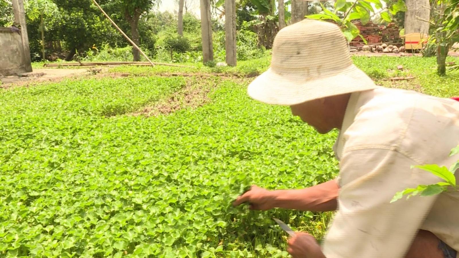 Chỉ khoảng 5% tổng diện tích rau, hoa, quả được sản xuất theo quy trình an toàn