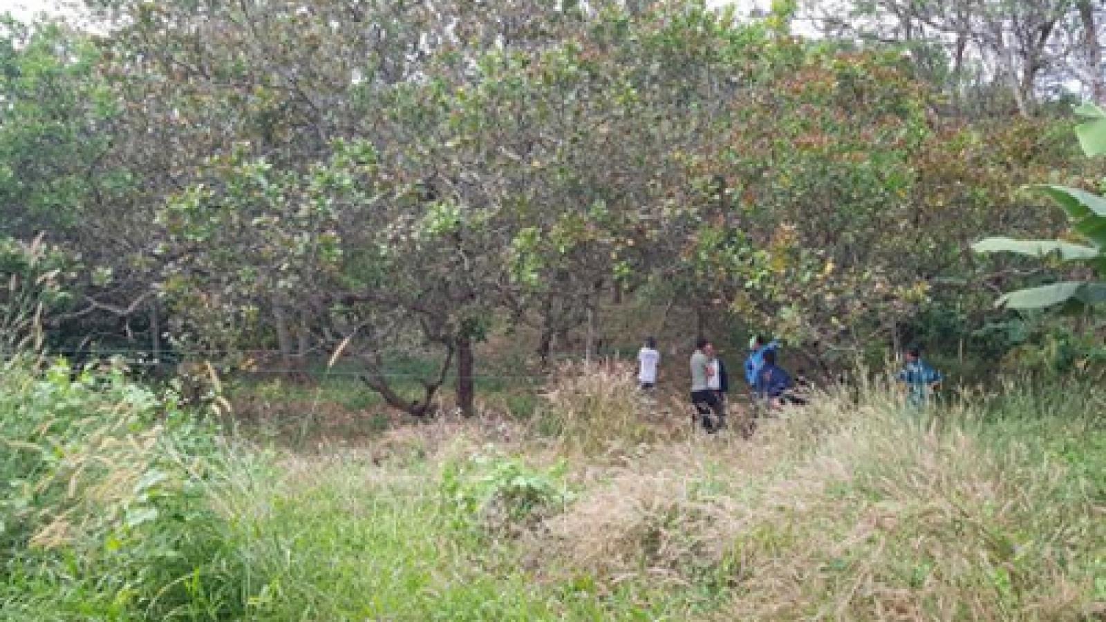Điều tra làm rõ vụ thi thể người đàn ông trên ngọn cây