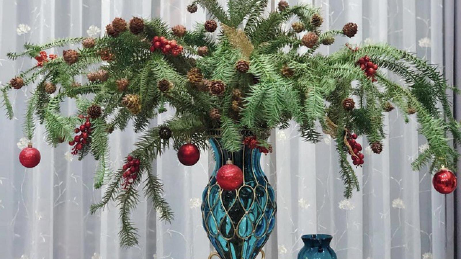 Chưa tới Noel người dân Hà Nội đã săn lùng thông tươi về cắm