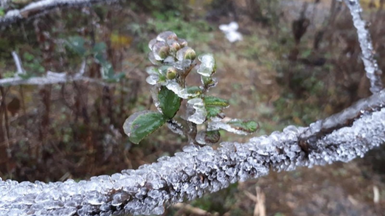 Dự báo thời tiết hôm nay: Vùng núi cao có băng giá và sương muối