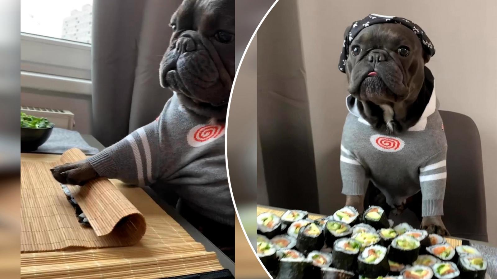 """Tròn mắt xem chú chó bulldog trổ tài làm sushi như """"đầu bếp chuyên nghiệp"""""""
